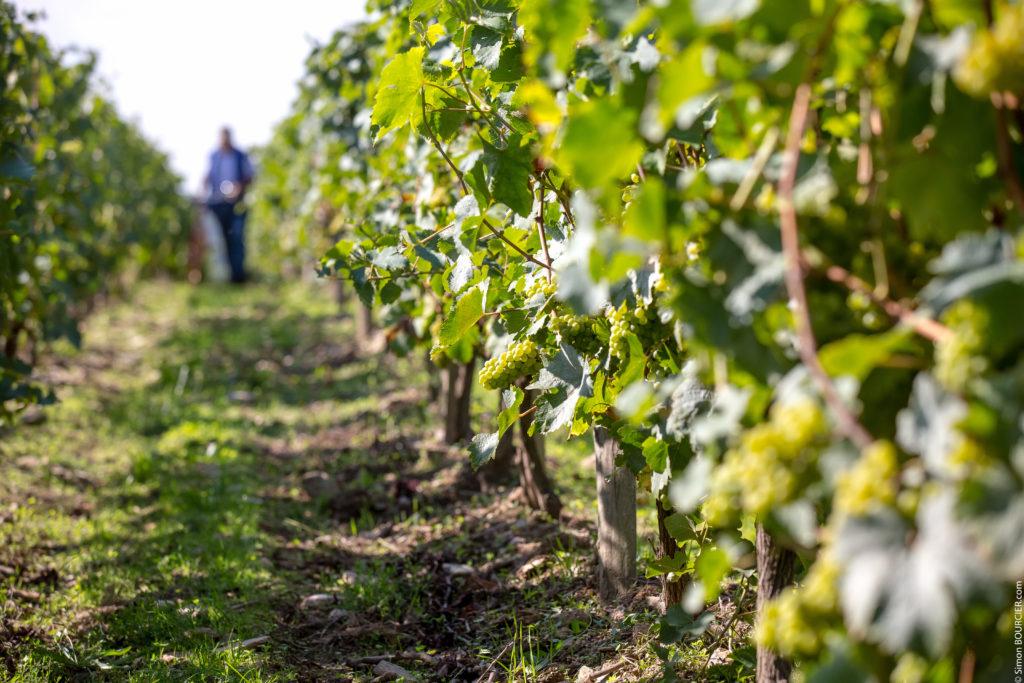 Vue sur les vignes du domaine Mourat (Mareuil sur Lay)
